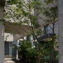 シンボルツリーのある中庭