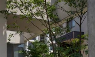 シンボルツリーのある中庭|中筋の家