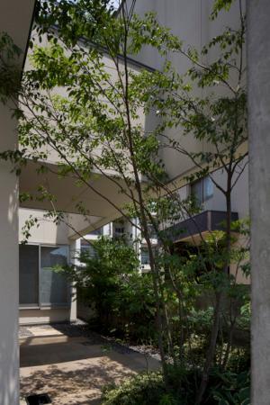 中筋の家の部屋 シンボルツリーのある中庭
