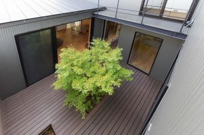 中庭を見下ろす (埼玉県北鴻巣の家)