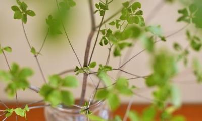 リビングのグリーン|a邸・リビングをベストポジションにして、すがすがしく、片付けやすく・・・。