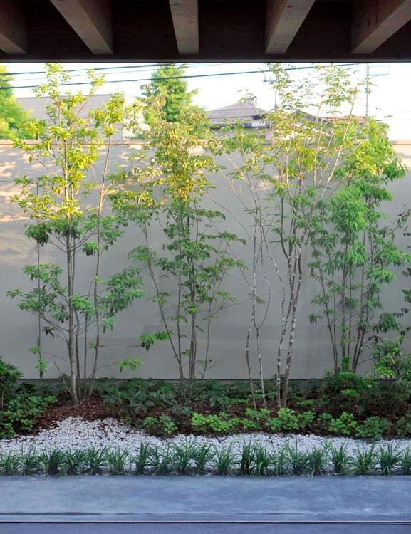 ソリッドハウスの部屋 植栽のある中庭