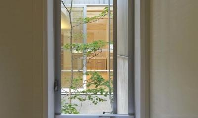 阿倍野の家 (中庭を浴窓からを眺望できるバスルーム)