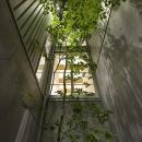 阿倍野の家の写真 四季を感じられるシンボルツリー
