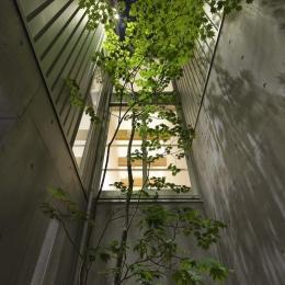 阿倍野の家 (四季を感じられるシンボルツリー)