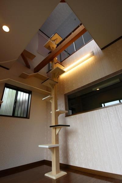 キャットタワー 吹抜け (猫と暮らす家 ~ 吹き抜けがない建売の住宅に吹き抜けとキャットウォークをつくって)