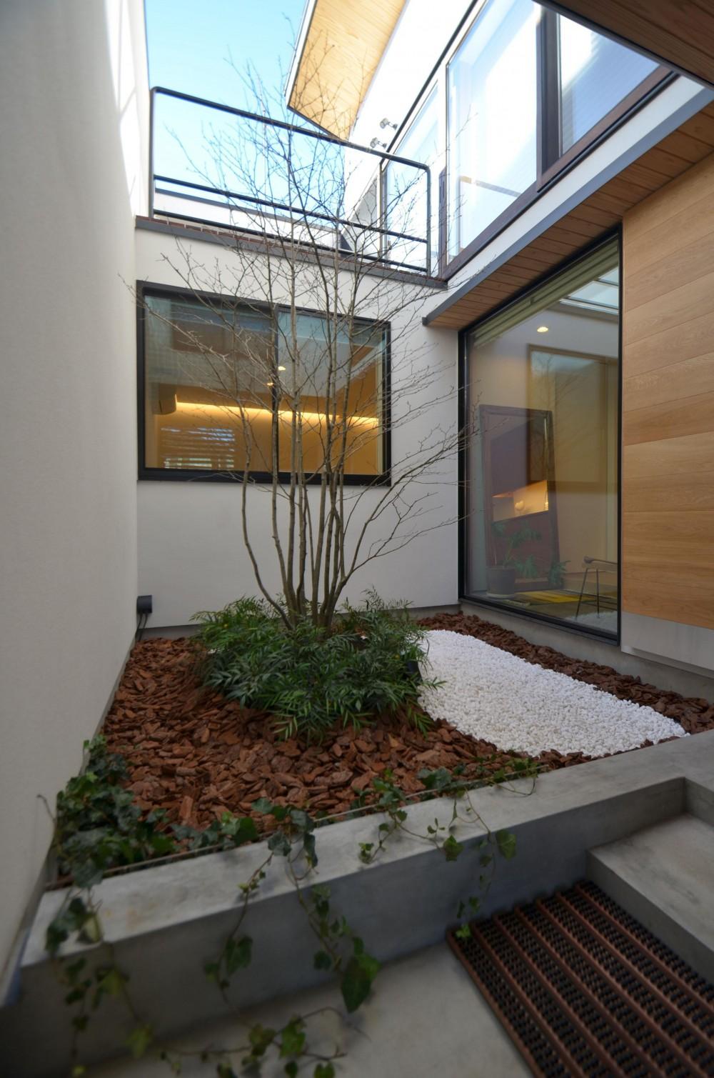 桃井M邸-中庭を中心としたコの字配置の立体コートハウス- (中庭)