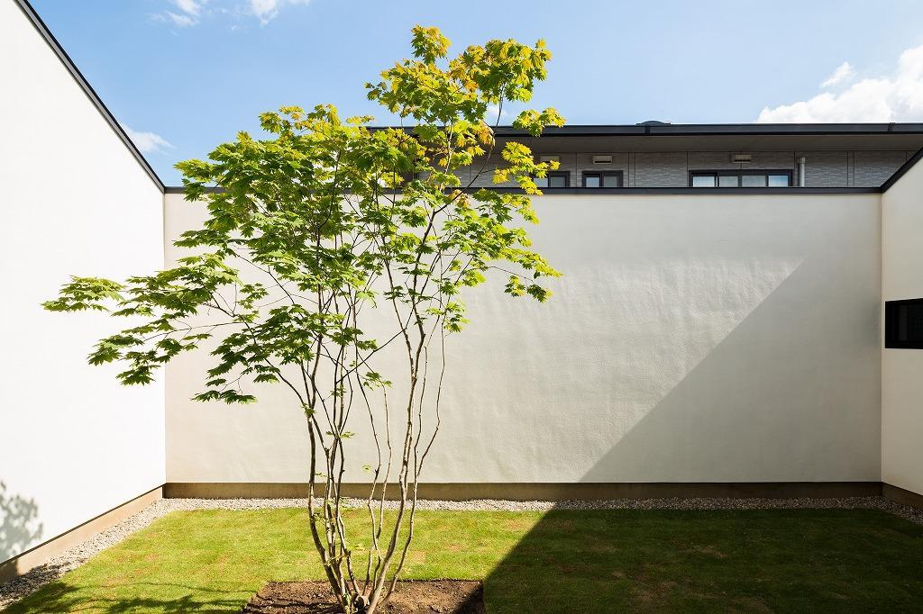 空を囲む家の写真 中庭