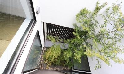 中庭のあるスキップフロアの家・OUCHI-32 (中庭見下ろし)