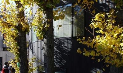 TOKYO TREE HOUSE