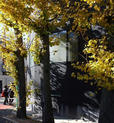 TOKYO TREE HOUSE (黄葉の背景としての住宅)