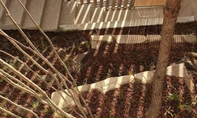 中庭から見る 杉格子と引戸の入口 その影|杉の家|杉格子の中庭のある家