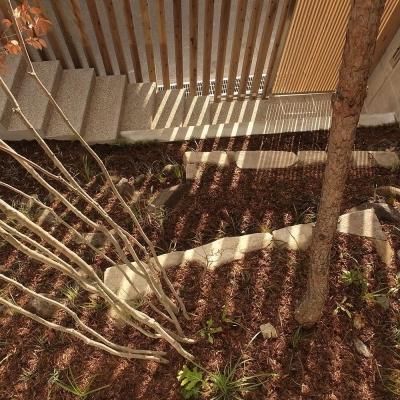 中庭から見る 杉格子と引戸の入口 その影 (杉の家|杉格子の中庭のある家)