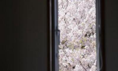 12tubo (桜が望める窓)