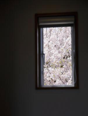 12tuboの部屋 桜が望める窓