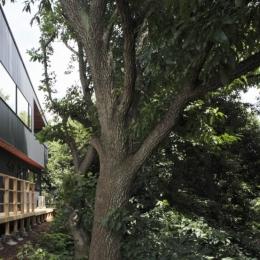 森に浮かぶ家 (外観4)