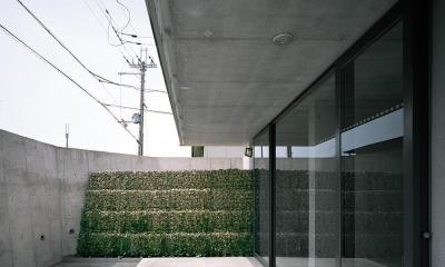 三つの中庭のある家|10mの大開口・擁壁をくり抜き地下のある家 (エントランス  中庭より 04  正面かご擁壁とツタ)