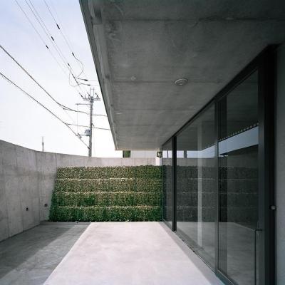 エントランス  中庭より 04  正面かご擁壁とツタ (三つの中庭のある家|10mの大開口・擁壁をくり抜き地下のある家)