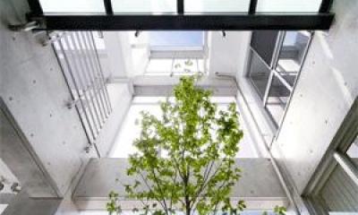 WHITE BOX&BLACK WALL (中庭から見上げる)