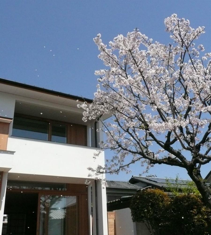 NDさんの住家の部屋 桜並木のある外観