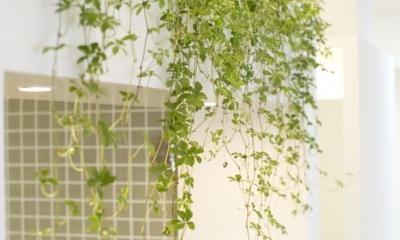 KEIDAS—光と風と緑があふれるオアシス (グリーン)
