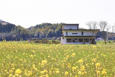 菜の花畑の中のピザ屋兼住宅 (外観)