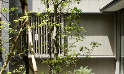 函南町の家 (中庭)