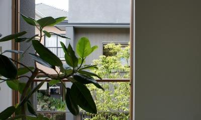 函南町の家 (居間から中庭をみる)
