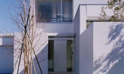 シンボルツリーのあるエントランス|石岡の家