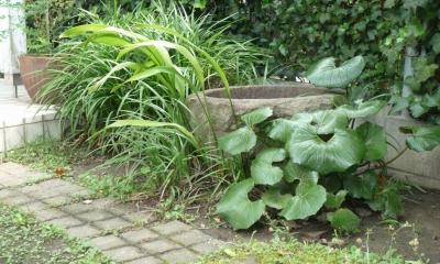 「潤い感のある緑」の成功例