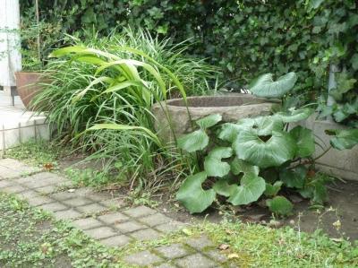 石臼とツワブキ (「潤い感のある緑」の成功例)