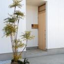 house kの写真 シンボルツリーのある玄関