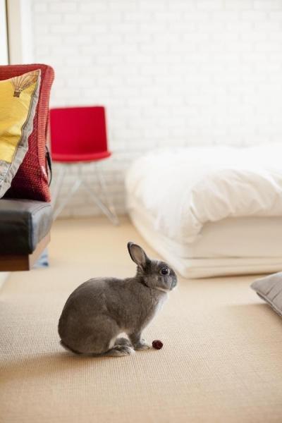 床 (CABIN-ザイルの床、羽目板の部屋、レンガの壁)