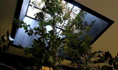 大田区A様邸 中庭のある3階建ての家 (2F デッキテラスへと伸びる植栽)