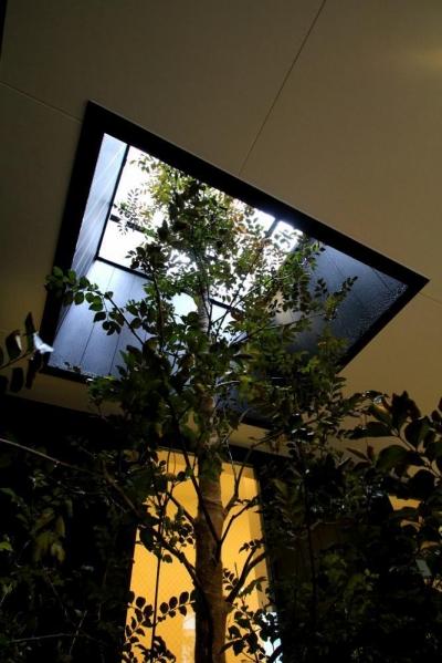 2F デッキテラスへと伸びる植栽 (大田区A様邸 中庭のある3階建ての家)