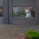 猫が迎えてくれる玄関