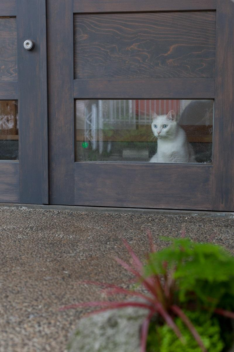 船橋・猫と暮らす家の部屋 猫が迎えてくれる玄関
