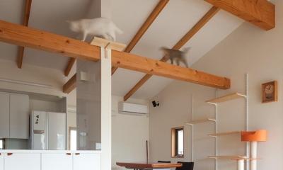 船橋・猫と暮らす家 (キャットウォークのあるダイニングキッチン)