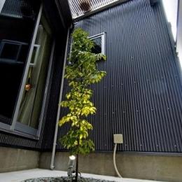 江戸川の家 (中庭にあるシンボルツリー)