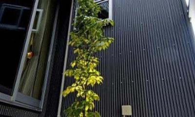 中庭にあるシンボルツリー|江戸川の家