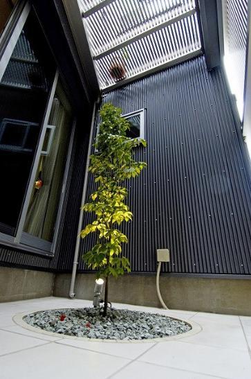 江戸川の家の写真 中庭にあるシンボルツリー