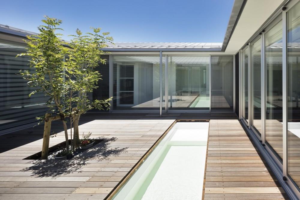 ジャムズ「BAN HOUSE 中庭に犬のプールがある家」