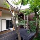 木漏れ日屋根の家の写真 ウッドデッキテラスにあるシンボルツリー