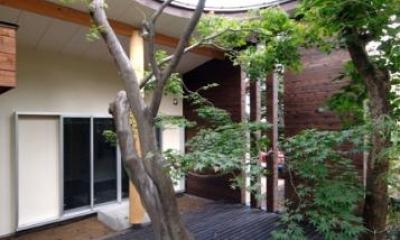 ウッドデッキテラスにあるシンボルツリー|木漏れ日屋根の家