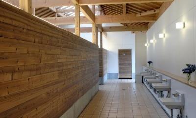 マザー牧場・まきばトイレ (内部にはアクセントと木の壁も使用しています。)
