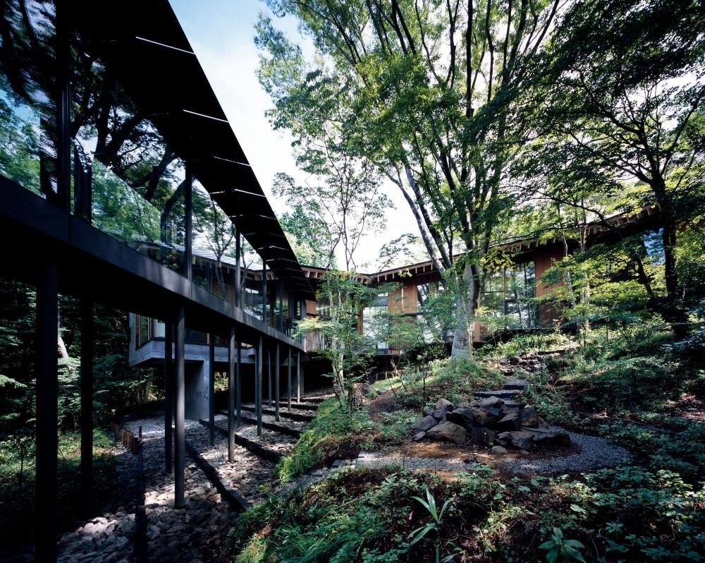 既存の大樹を中心とした中庭 (ヤマノイエ)