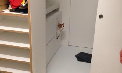 ネコウラ邸 50㎡につめた、ソーホー型キッチン中心ルーム (ねこトイレ)