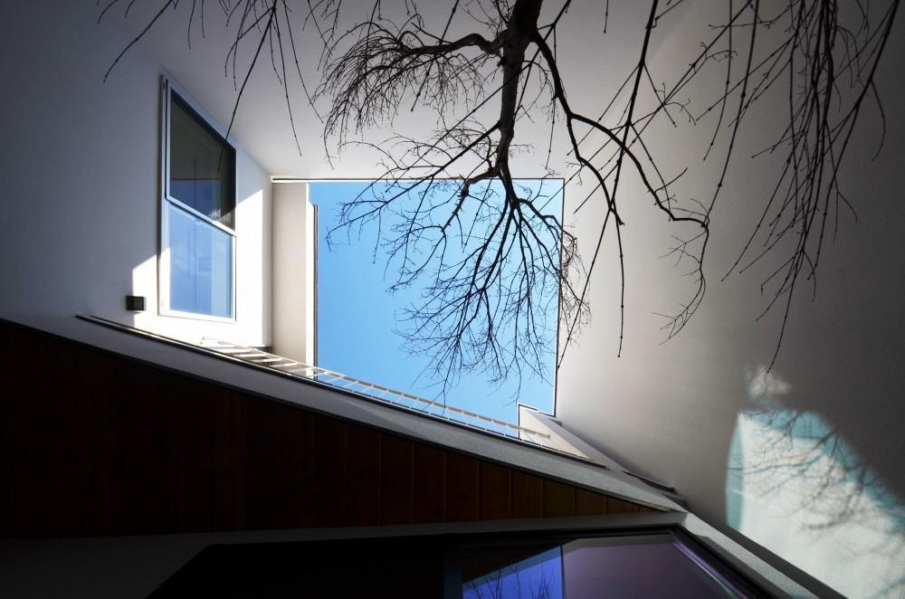 保谷O邸-「鳥かご」のあるシンプルモダンなコートハウス- (中庭を下から見上げる)