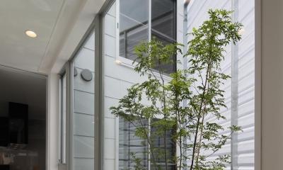にこいち-はうす~アトリエのある家~ (シンボルツリーのある小さな中庭)