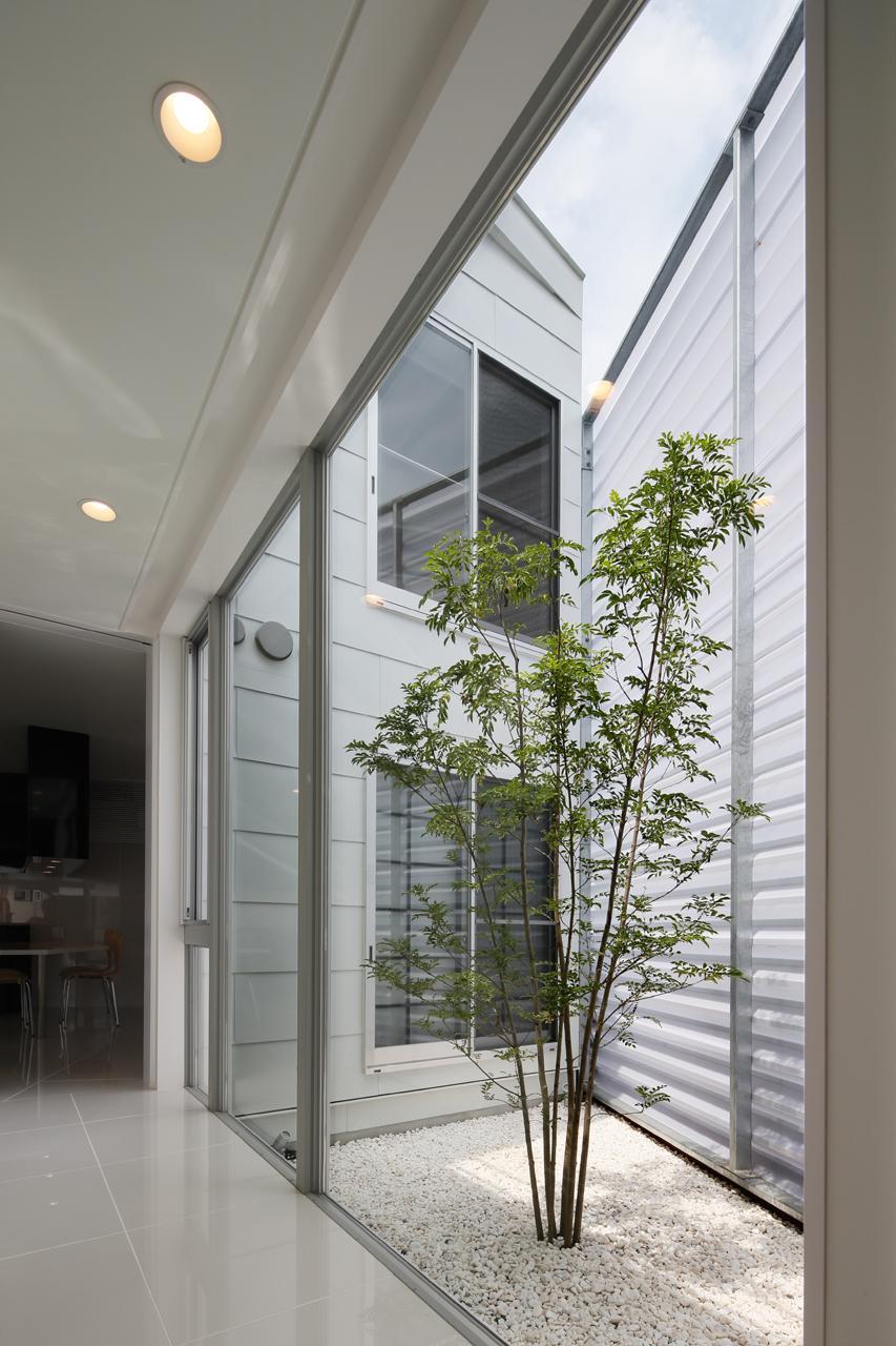 にこいち-はうす~アトリエのある家~の写真 シンボルツリーのある小さな中庭